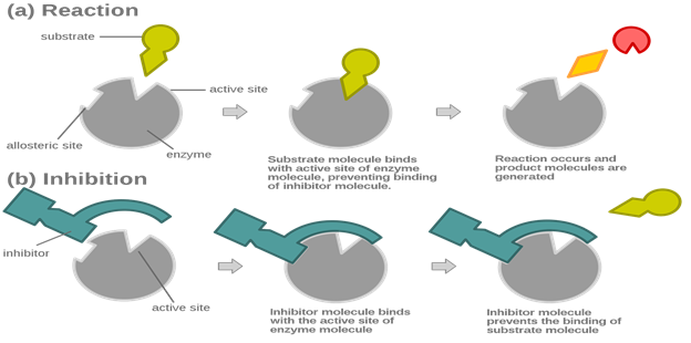 3. special Enzymes (1)
